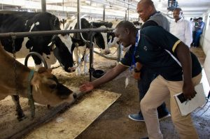 Livelihoods and Markets at Scotchill Holsteins